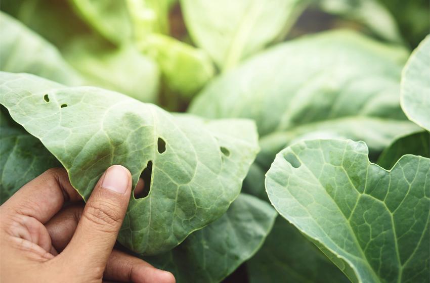 Pflanzen mit natürlichen Mitteln bekkämpfen